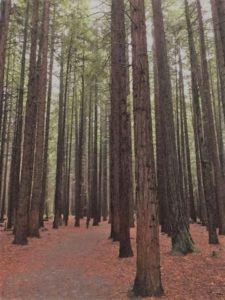 Redwood2_Adj